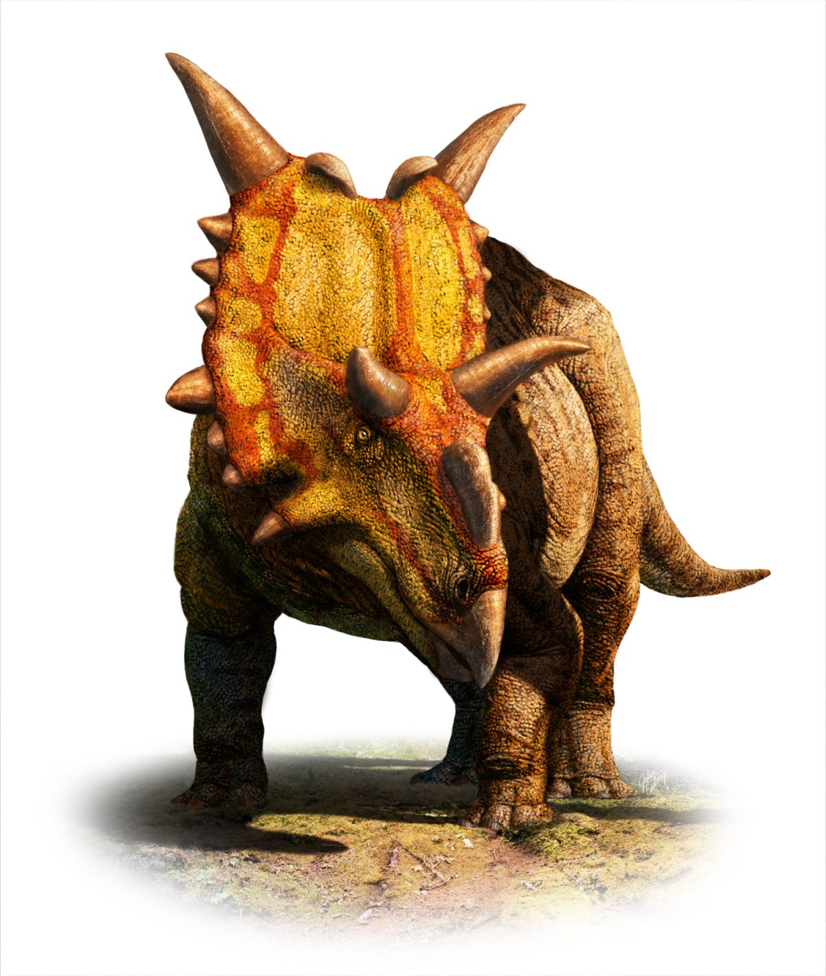 xenoceratops-foremostensis.jpg